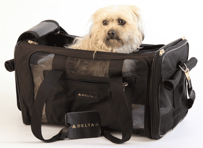 Bringing Your Pets to Panama from the USA or Canada
